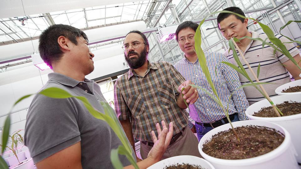 Harkamal Walia (second from left) discusses an experimental plan for the grant at the high-throughput phenotyping facility at the Greenhouse Innovation Center on Nebraska Innovation Campus. From left is Toshihiro Obata, Hongfeng Yu and Qi Zhang. Not pictured are researchers Chi Zhang and Gota Morota. (Craig Chandler - University Communication)